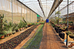 Greenhouse. Commercial greenhouse in Thailand royalty free stock photo