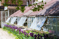 greenhouse Photographie stock