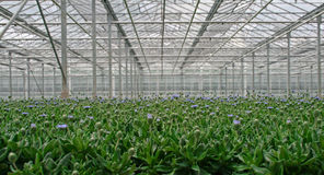 Greenhouse Stock Photo
