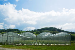 Greenhouse agriculture Royalty Free Stock Image