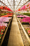 Greenhouse Aisle Royalty Free Stock Photos