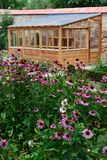 Greenhouse in back garden. With echinacea plants stock images
