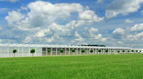 Greenhouse. In a beautiful sky Royalty Free Stock Photography