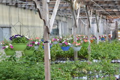 Greenhouse Bounty Royalty Free Stock Photos