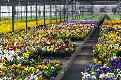 Greenhouse with bright colorful flowers Royalty Free Stock Photos