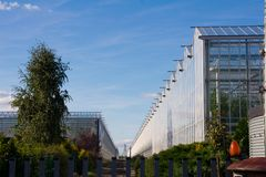 Greenhouse and bushes in a plantation. Of vegetables Stock Photos