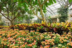 Greenhouse_C Royalty Free Stock Image