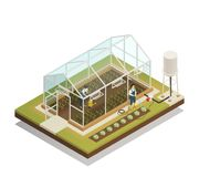 Greenhouse Facility Irrigation Isometric Composition. Greenhouse cable-supported irrigation facilities isometric composition with gardeners watering plants with Royalty Free Stock Image