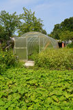 The greenhouse from cellular polycarbonate on a country section Stock Photos