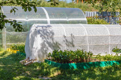 Greenhouse, cold frame and  seedbed. Vegetables growing  in the vegetable  garden. Royalty Free Stock Photos