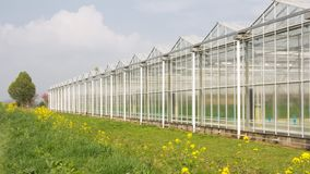 Greenhouse with coleseed in front. Dutch greenhouse with yellow blooming coleseed in front stock photos