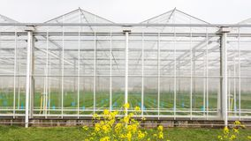 Greenhouse with coleseed in front royalty free stock image