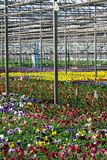 Greenhouse - colorful Stock Photography