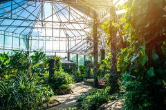 Greenhouse For conservation and education. Bangkok,Thailand Royalty Free Stock Photos