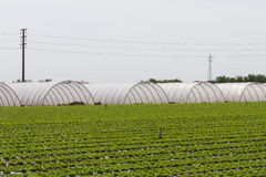 Greenhouse in the country Stock Images
