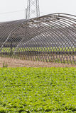 Greenhouse in the country Stock Photo