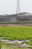 Greenhouse in the country Royalty Free Stock Photography