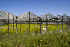 Greenhouse with crops Stock Photography