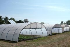 Greenhouse with cultivated fresh vegetables. Greenhouse in farm with cultivated fresh vegetables royalty free stock photos