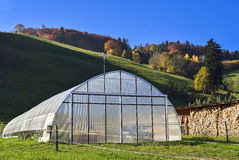 Greenhouse with cultivated fresh vegetables from Wavern. Stock Photography
