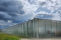 Greenhouse cultivation Royalty Free Stock Image