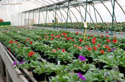 Greenhouse for the cultivation of flowers Stock Photography