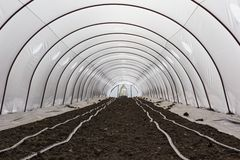 Greenhouse cultivation Stock Photography