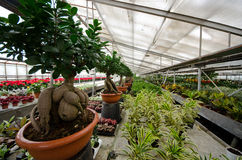 Greenhouse for the cultivation of ornamental plants and bonsai Royalty Free Stock Images
