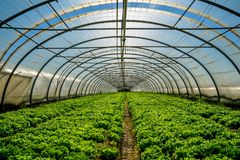 Greenhouse for the cultivation of salad Stock Photos