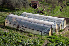 Greenhouse for the cultivation of salad. Small greenhouse for growing salad Royalty Free Stock Images