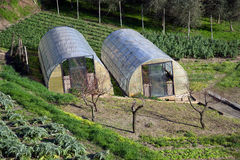 Greenhouse for the cultivation of salad. Small greenhouse for growing salad Royalty Free Stock Image