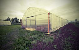 Greenhouse for the cultivation of vegetables in the Po Valley in. Large greenhouse for the cultivation of vegetables in winter in the Po Valley in Europe Royalty Free Stock Image