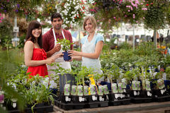 Greenhouse Customer and Workers. Customer in greenhouse receiving help from employees Stock Photos