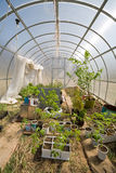 Greenhouse with different plants Royalty Free Stock Images