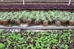 Greenhouse Royalty Free Stock Images
