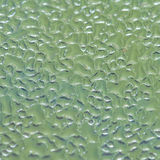 The Greenhouse Effect. An abstract macro shot of condensation formed on a greenhouse window Stock Photos