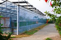 Greenhouse exterior Royalty Free Stock Photos