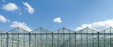 Greenhouse exterior. Exterior of a commercial greenhouse in the Netherlands Stock Photo