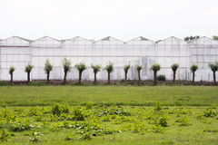 Greenhouse exterior Stock Image