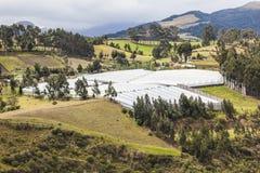 Greenhouse farm in the Ecuadorian sierra Stock Images