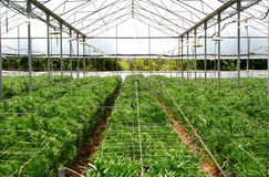 Greenhouse farming. New plants in greenhouse Stock Images