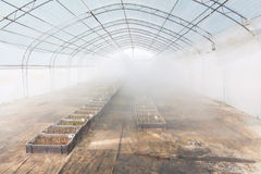 Greenhouse farming irrigation Stock Photo