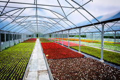 Greenhouse for flower growing Royalty Free Stock Images