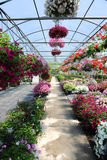 Greenhouse with Flowers Royalty Free Stock Image