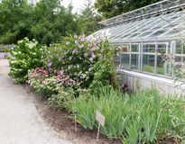 Greenhouse with flowers Royalty Free Stock Photography