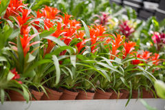 Greenhouse flowers growing Royalty Free Stock Photos