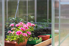 Greenhouse for flowers and plants Stock Image