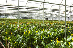 Greenhouse flowers ready for harvest cartridges Stock Images