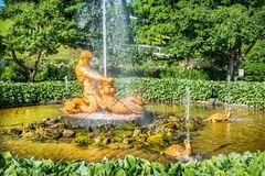 Triton and sea monster. The greenhouse fountain Triton, tearing the jaws of the monster, and turtles in Peterhof amidst bright summer greens Stock Images