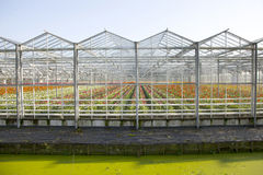 Greenhouse full of blossoming flowers in the netherlands Stock Photo